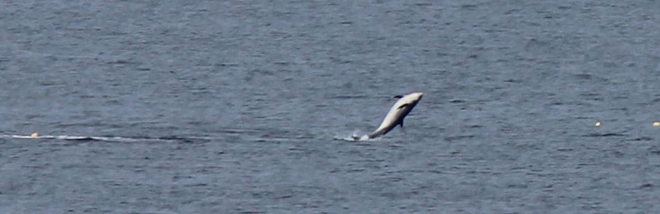 See Dolphins, seals and ospreys from Covesea Lighthouse Lossiemouth